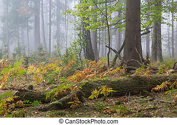 Autumnal deciduous stand with dead tree