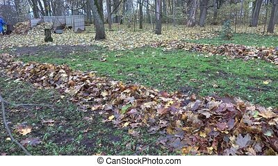 autumnal dry maple leaves swept into pile in garden yard. 4K...