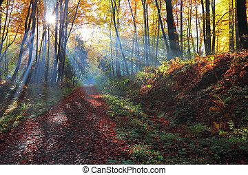Autumnal forest and sun rays with mist, Poland , Ojcow,...