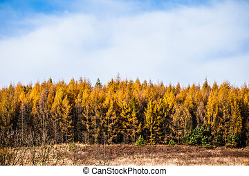 Autumnal forest and white rock, Ojcowski National Park, Ojcow, Poland