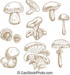Autumnal forest mushrooms sketches set
