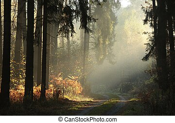 Autumnal forest on a foggy morning