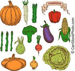 Autumnal harvest vegetables vintage sketch icons