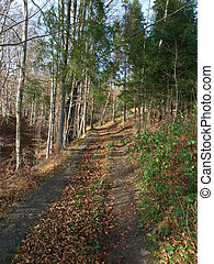 Autumnal landscape. Forest trail covered with dry leaves