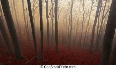 Autumnal landscape in foggy forest animation footage