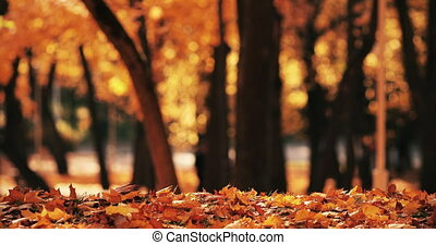 Stock footage of beautiful idylic scenery of colorful orange and yellow foliage on the ground on sunny autumnal day. Unrecognizable people in blurred background looing at the trees.