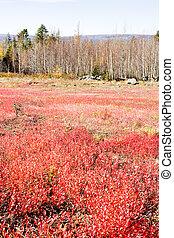 autumnal landscape, Maine, USA