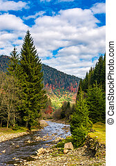 autumnal landscape with river in spruce forest - autumnal...