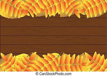 Autumnal leaf of beech and rowan,