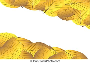 Autumnal leaf of beech,