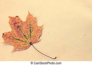 Autumnal leaf on old paper