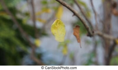 yellow falling leaf spinning