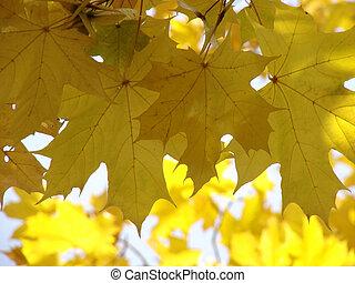 autumnal leaves 3