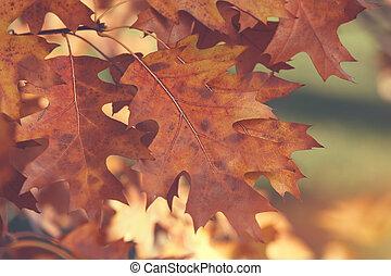 Autumnal leaves on a tree