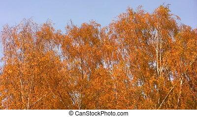 autumnal leaves on sky