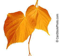 Autumnal leaves on white