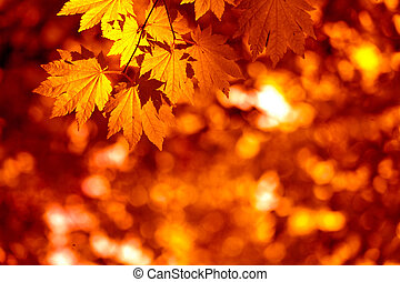 Autumnal leaves - Colorful autumnal background with maple...