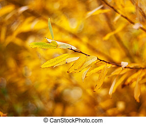 Autumnal leaves with shallow depth of field