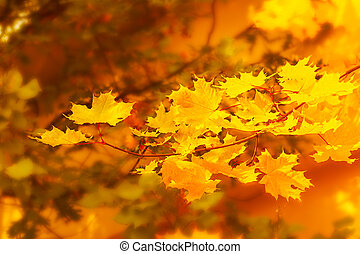 Autumnal maple branch on golden fall background