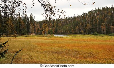Autumnal meadow and forest