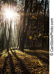 Autumnal misty morning