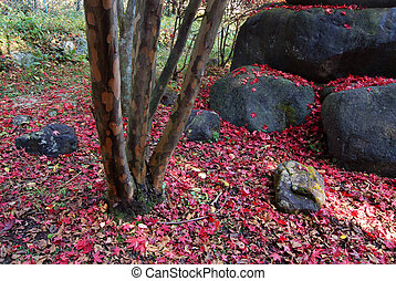 Japanese autumnal background with fallen red maple leafs, big boulders and tree trunk