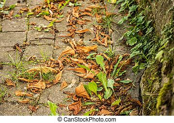 autumnal painted leaf on cobblestone