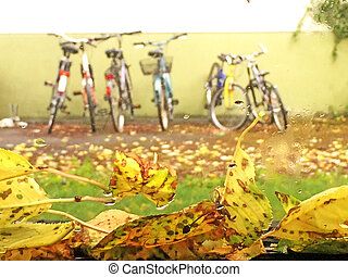 autumnal painted leaves on a car window with bicycles in the background