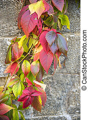autumnal painted leaves on a concrete wall