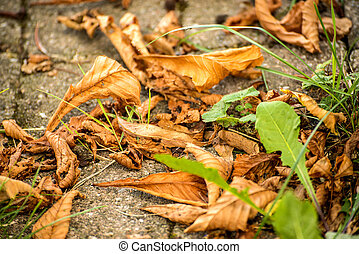 autumnal painted leaves on cobblestone