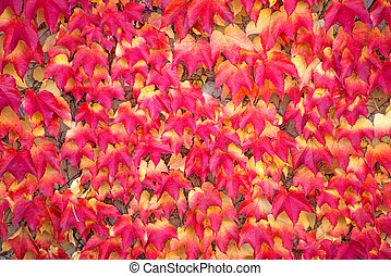 autumnal painted leaves