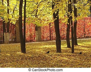 autumnal park 1