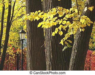 autumnal park 3