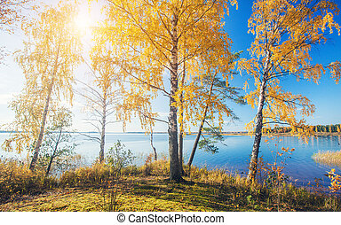 Autumnal Park. Autumn Trees and lake