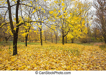 Autumnal Park. Autumn Trees and Leaves