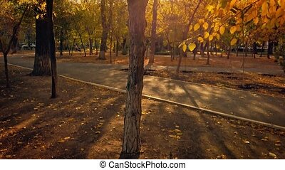 Autumnal park on sunset time with long shadows of trees covered with golden leaves, tilt up shot.