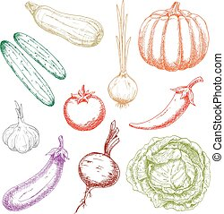 Autumnal ripe vegetables colorful sketch icons