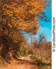 Autumnal road - Autumnal