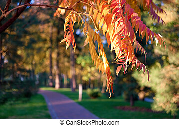 Autumnal rowan tree branch close up. Orangle and yellow ...