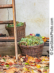 autumnal still life with fruit and leaves - autumn fruit...