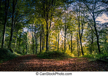 Autumnal trail surrounded by trees