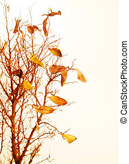 Autumnal tree branch with dry leaves
