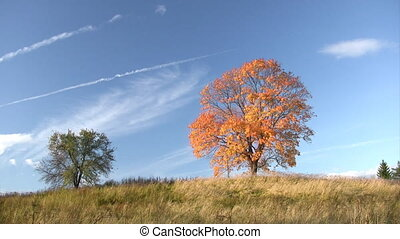 Autumnal trees against blue sky background