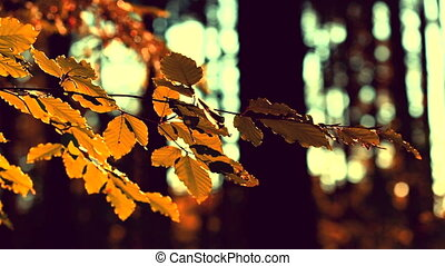 Autumnal view in the forest, sepia tone - Autumnal leaves in...