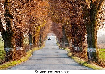 road with car and beautiful old alley of lime tree