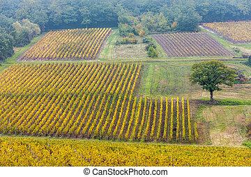 autumnal vineyards, Burgundy, France