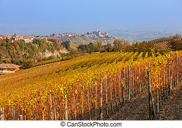 Autumnal vineyards on the hills in Northern Italy. - ...