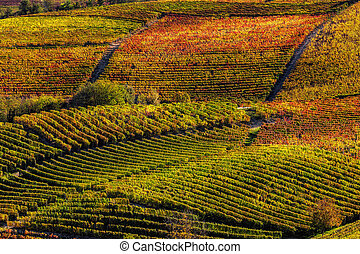 Autumnal vineyards on the hills of Langhe in Piedmont, Italy.