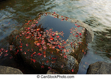 autumnal background with red maple tree leafs and flowing water in zen-garden, Tokyo, Japan