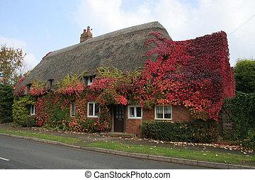 Autumn/fall colours - Autumn red colours of Virginia creeper...